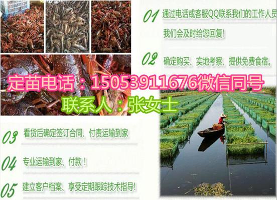 广元小龙虾苗怎么养殖集团有限公司欢迎您