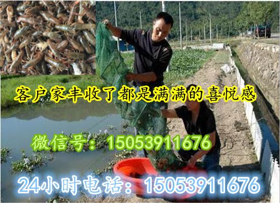 提供养殖技术、克拉玛依淡水小龙虾苗批发、克拉玛依、随时提供上门培训