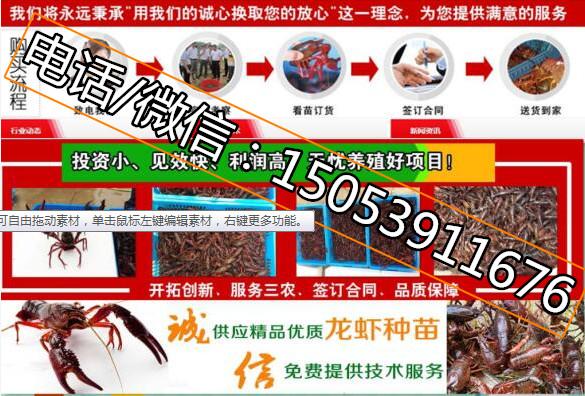 白银淡水小龙虾苗批发价格免费提供养殖技术