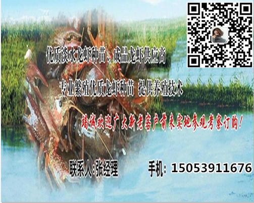 南平淡水小龙虾苗养殖基地集团有限公司欢迎您