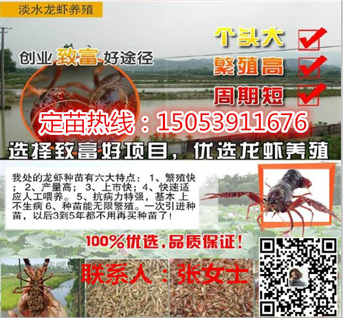 苏州淡水小龙虾怎么养殖优质小龙虾供应商