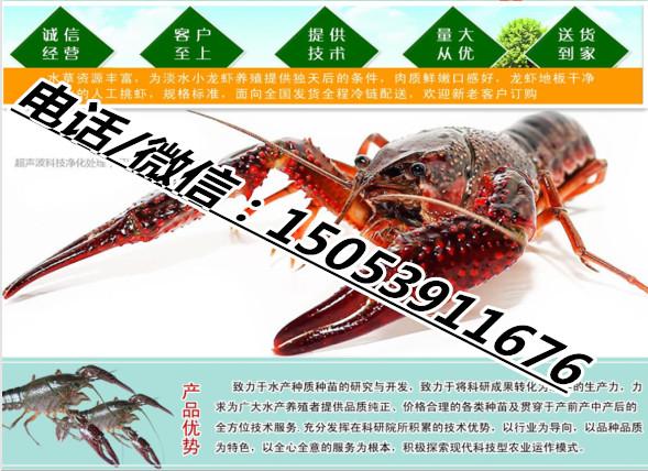 仙桃小龙虾种虾多少钱实业集团有限公司