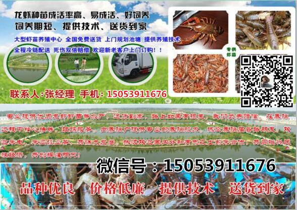 拉萨淡水小龙虾种虾价格优质小龙虾供应商