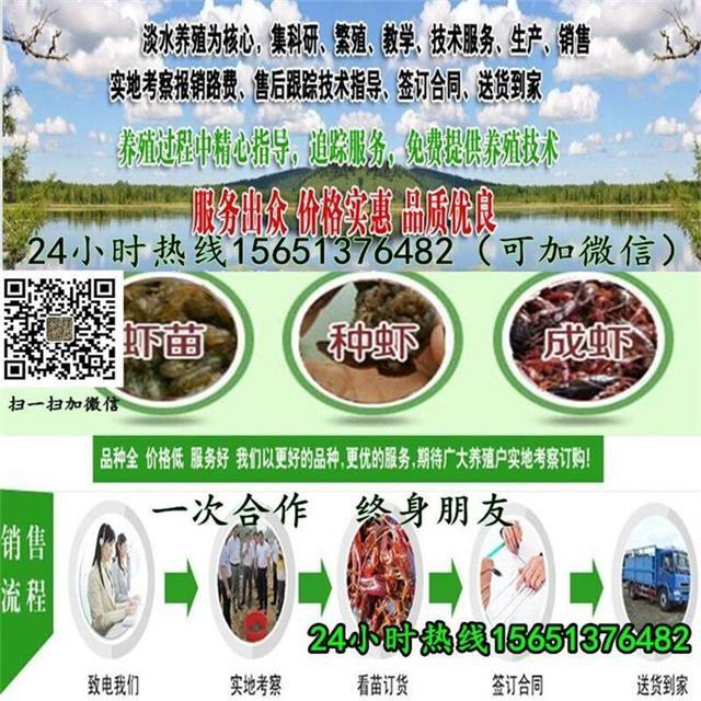 漳州市漳浦县小龙虾种苗价格报价