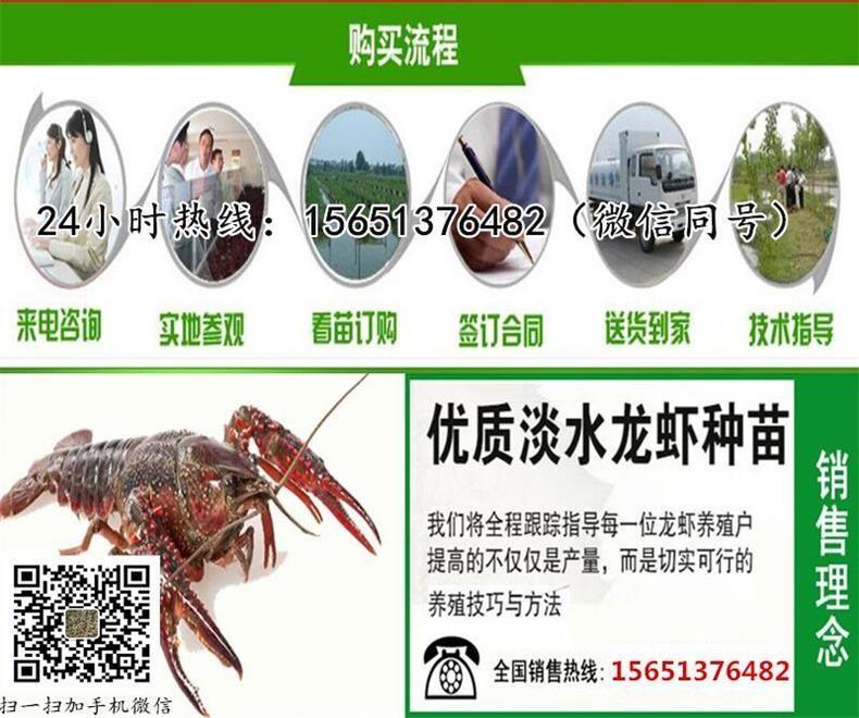 铜陵市铜陵县小龙虾苗养殖场小龙虾种苗养殖成本和利润