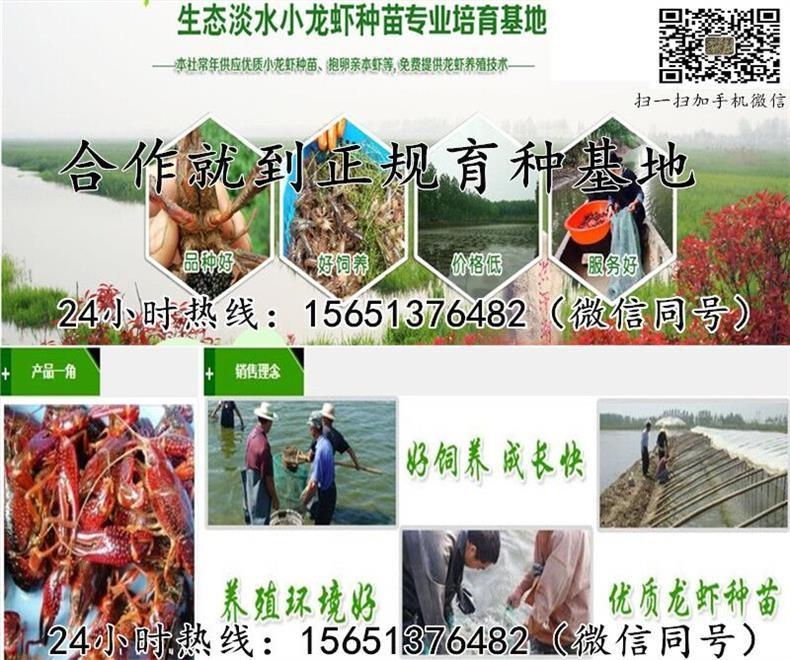 温州市平阳县淡水小龙虾种苗批发报价
