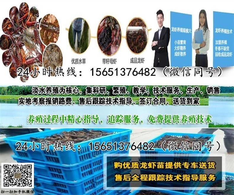 济宁市鱼台县小龙虾种苗价格批发