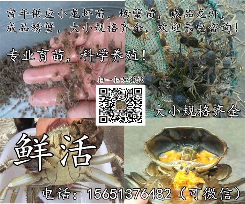泉州市鲤城区小龙虾苗养殖场