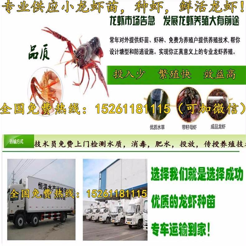 仙桃小龙虾苗供应价格小龙虾养殖技术