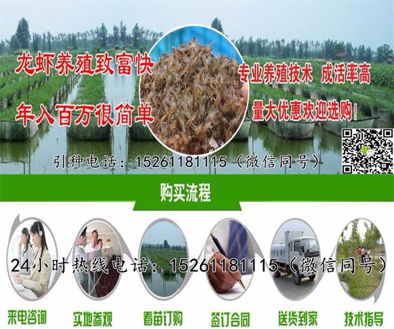 合肥小龙虾苗市场批发小龙虾苗种多少钱一斤