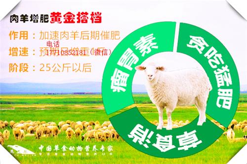 瘦羊增肥剂羊育肥饲料配方快速育肥羊