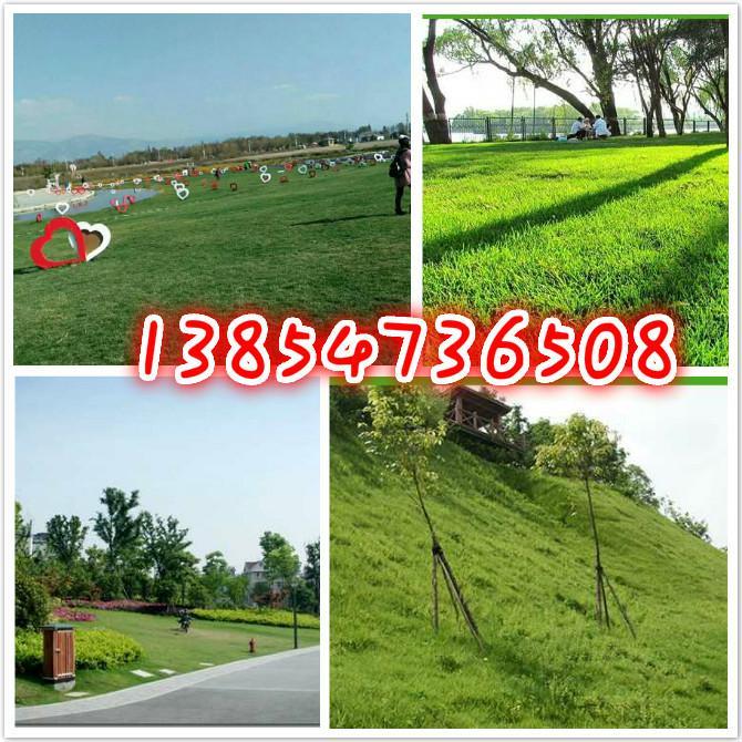 蚌埠边坡固土防护种什么草种好
