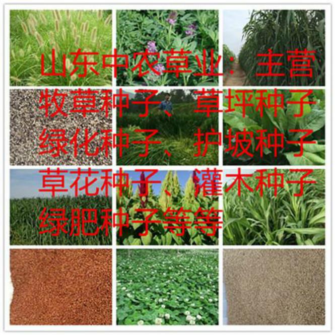 渭南市草坪草的养护