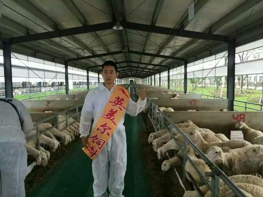 圈养肉羊养殖饲料圈养羊催肥贵州省修文县