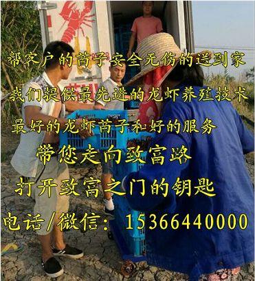 喀什英吉沙淡水小龙虾苗养殖基地、喀什英吉沙有限公司