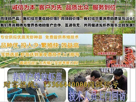 辽阳辽阳淡水小龙虾养殖场、辽阳辽阳有限公司