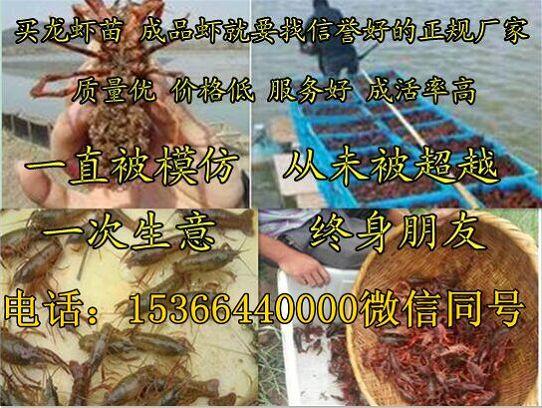 菏泽单县小龙虾种虾养殖技术、菏泽单县有限公司