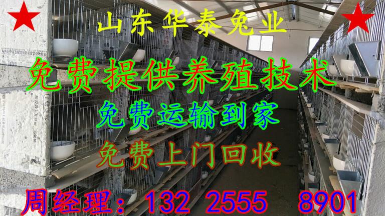 扎兰屯杂交野兔销售渠道13225558901