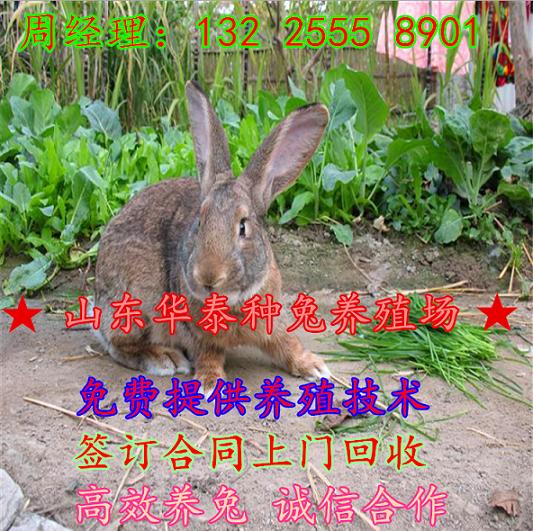 长丰县养殖杂交野兔利润怎么样关岭布