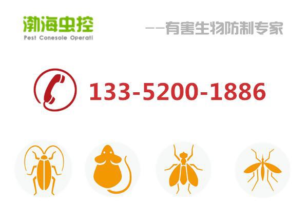天津灭臭虫公司 渤海虫控提供专业灭臭虫服务