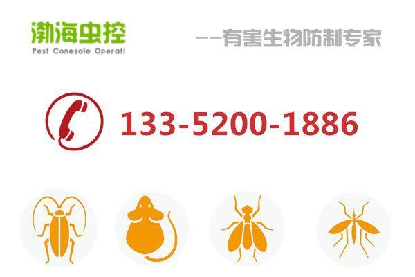 天津灭蚂蚁公司渤海虫控提供专业蚂蚁、小黄家蚁消灭上门服务!