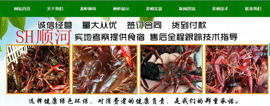 宿州哪里有小龙虾养殖场一养殖场一手货源价格优惠