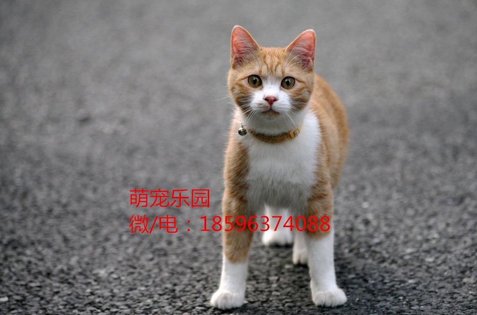 涵江区小猫