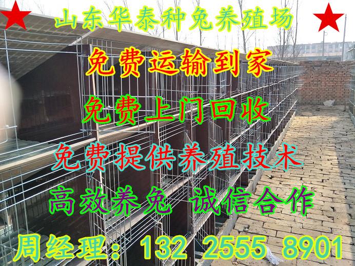长丰县养殖杂交野兔利润怎么样临桂县