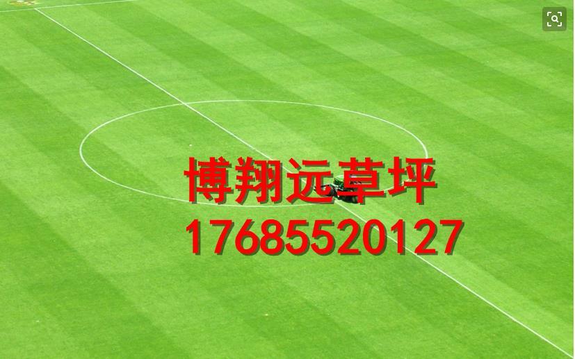 巴彦淖尔五原县笼式足球场塑料草坪公司