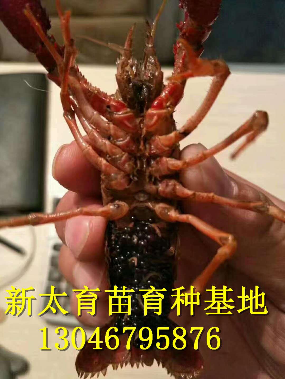 尤溪县虾苗场怎么样_云南商机网招商代理信息