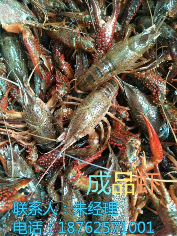 小龙虾养殖基地价格主变宣城市绩溪县量小龙虾养殖基地价格