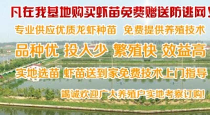 龙虾苗哪里有卖价格主变宣城市泾县量龙虾苗哪里有卖价格