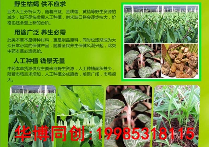 邢台市那里白芨种植技术欢迎您