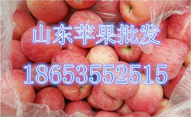 山东库存苹果大量批发