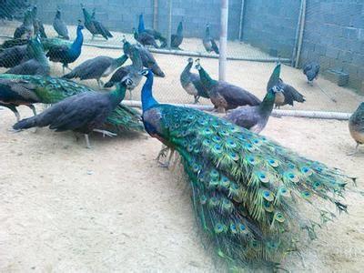 欢迎参观中卫市哪里有鸵鸟养殖场兴旺特种养殖欢迎你
