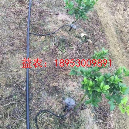 周口小型灌木灌溉水流可调节喷头