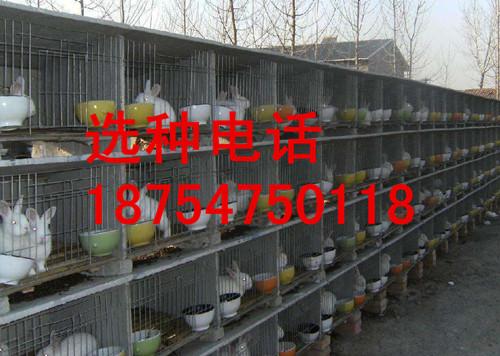石家庄野兔价格野兔放养围栏建设视频