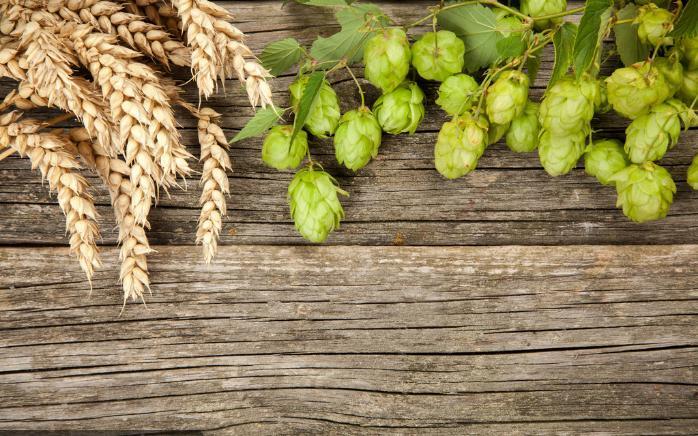 漳州啤酒麦芽价格
