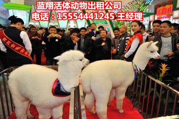 陕西省、创意暖场活动附近有出租海狮表演的吗_云南商机网招商代理信息