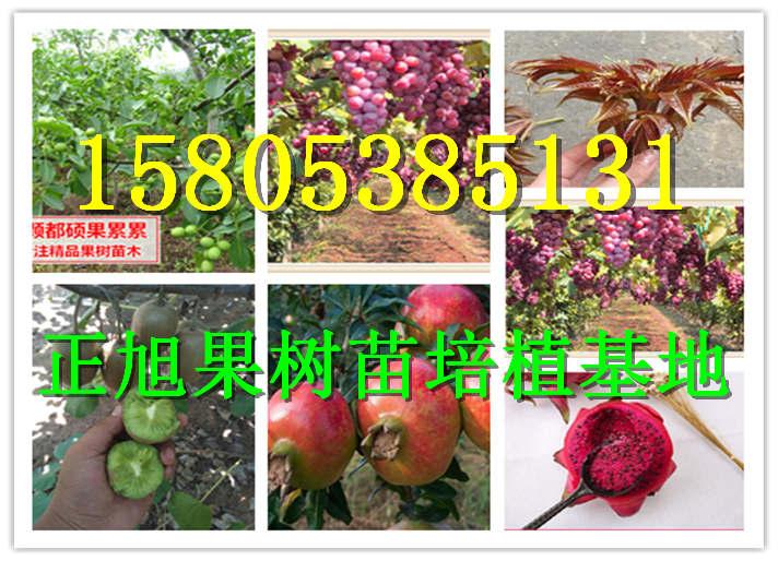 江西抚州晚熟嫁接桃树苗哪里有卖的出土价是多少钱