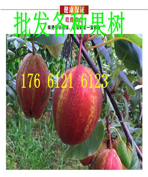 云南丽江大棚草莓苗2018推出价格