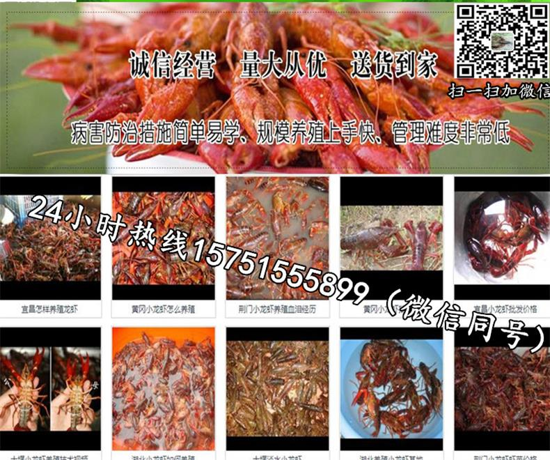 常州市龙虾种苗一斤多少费用