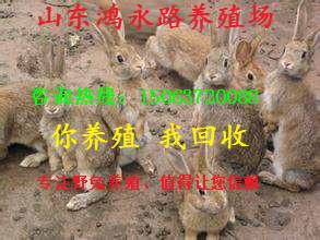 牡丹江兔子养殖场并提供养殖培训生长速度快-兔子养殖注意找哪家