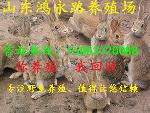 宿迁杂交野兔养殖场价格行情