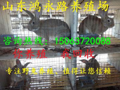 无锡野兔养殖场-野兔养殖场价格生产厂家