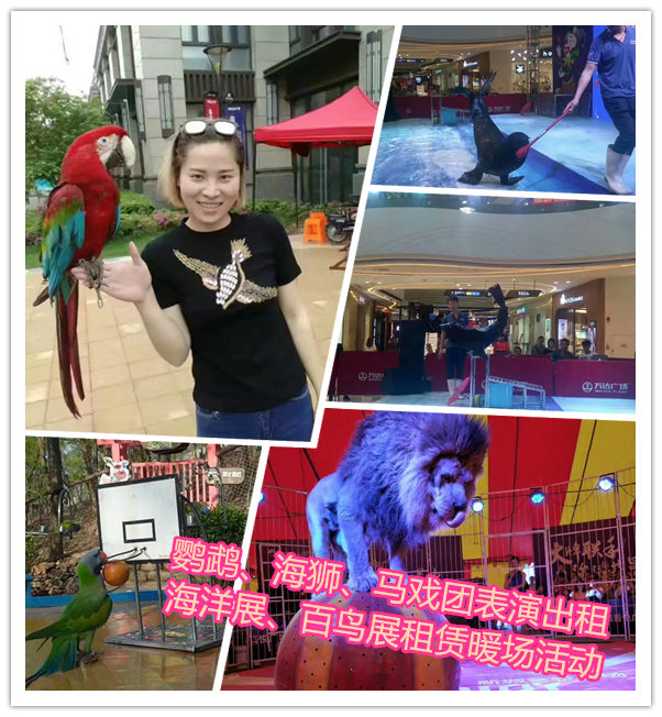 哪有呆萌海狮表演出租郴州市海狮海豹展览