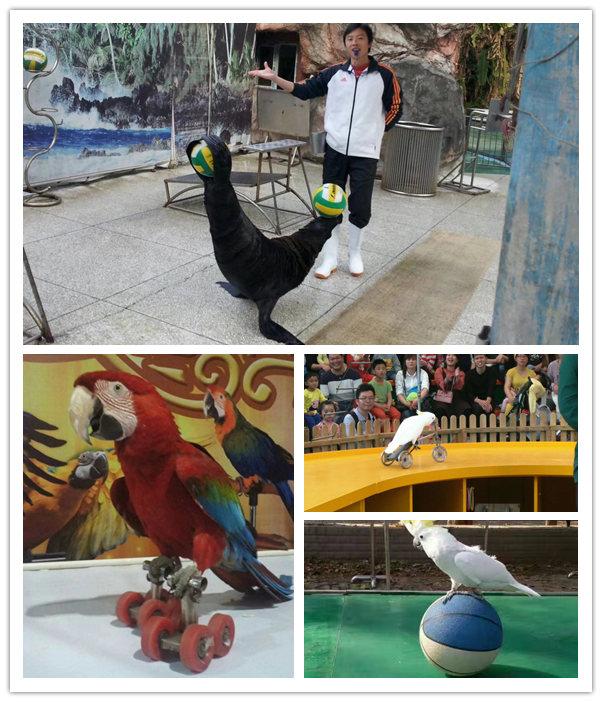 哪有呆萌海狮表演出租湛江市海狮海豹展览