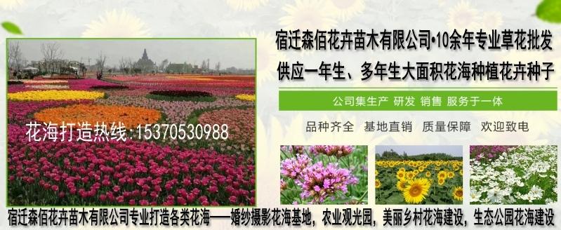 一斤茶条槭种子可种多少亩
