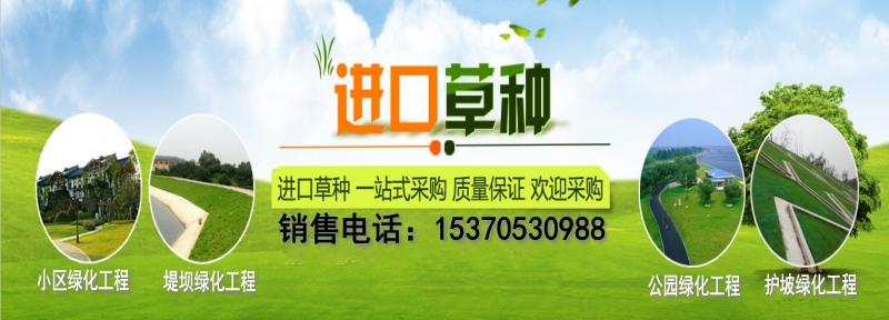 江苏护坡可以种植狗牙根高羊茅白三叶黑麦草可以混种