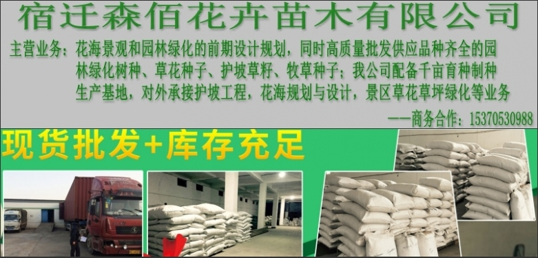 韭兰种子价格多少亩用量播种技术